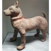 中国古代イヌWikimedia