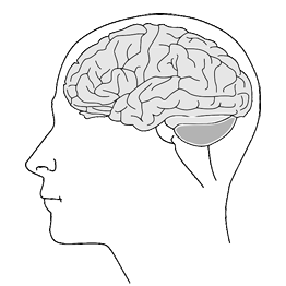 brain-pixabay.png