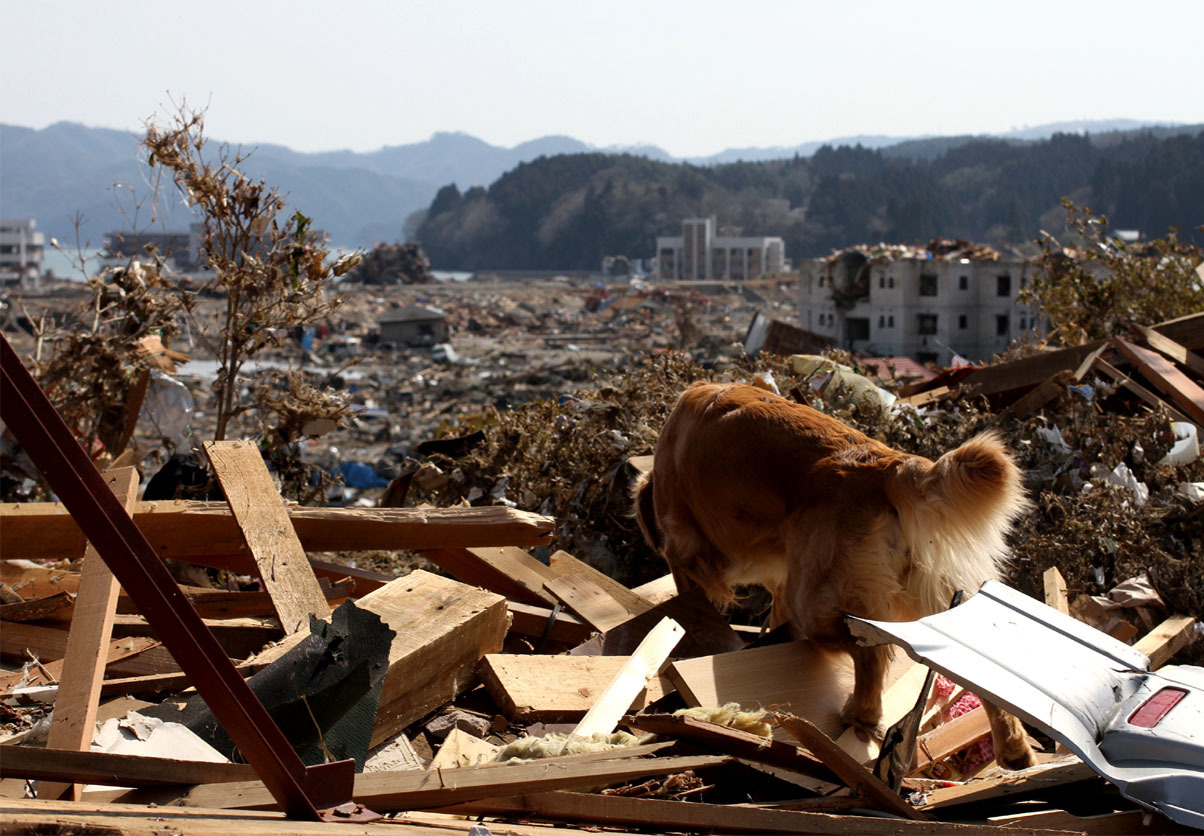 忘れまい 東日本大震災(9)