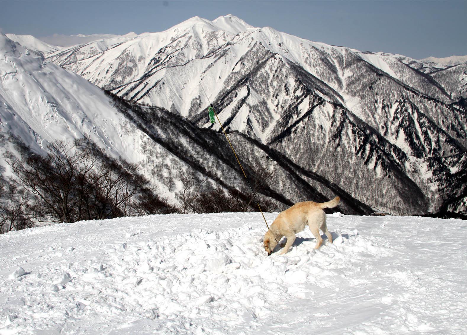 201703 雪中捜索(24)