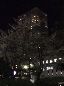 観覧劇場最寄駅前桜