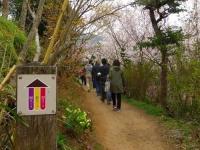 福島花見山13