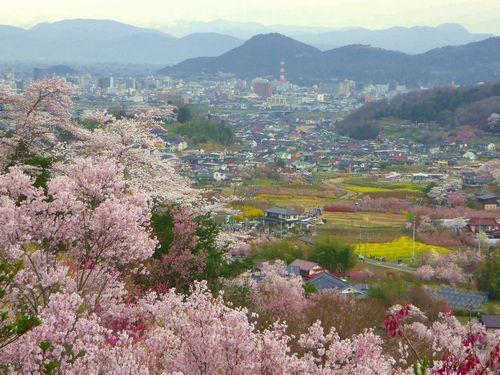 福島花見山20