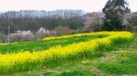福島花見山25花の谷コース
