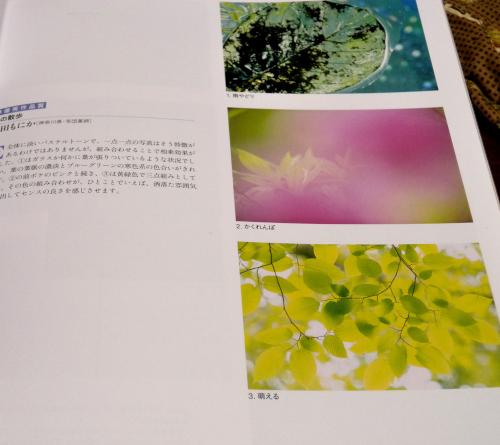 DSCN9090_2996.jpg