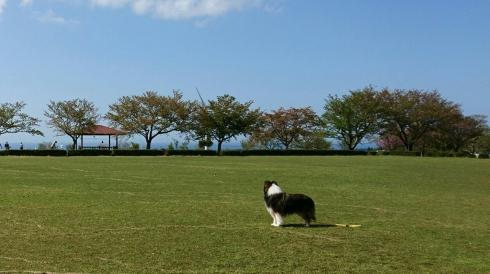 29年4月18日仁王堂公園