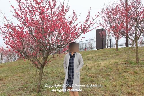 naohana-0306-6322.jpg
