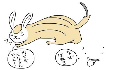 ウサギシマリス