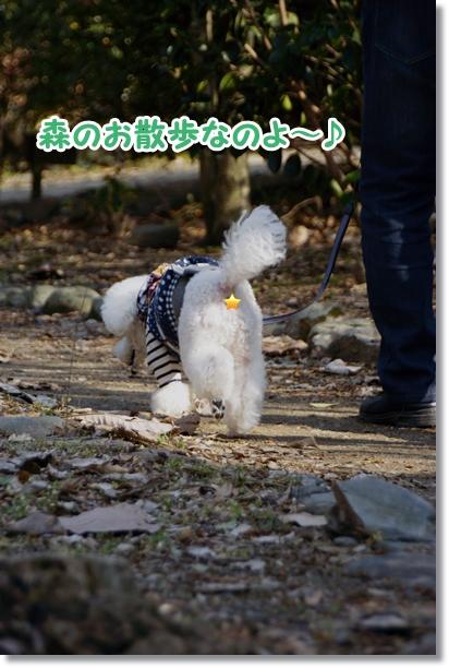 森のお散歩1