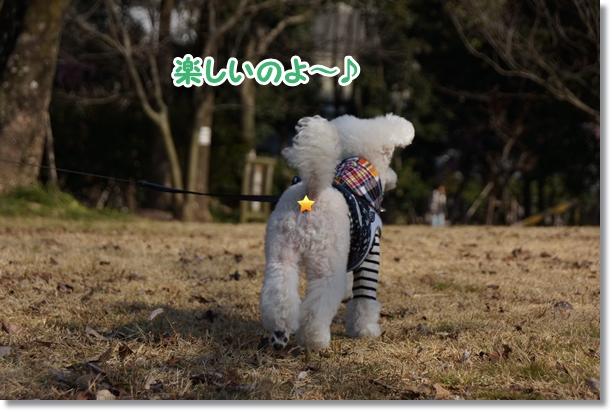 森のお散歩4