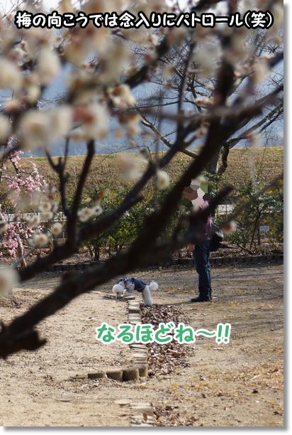 森のお散歩6
