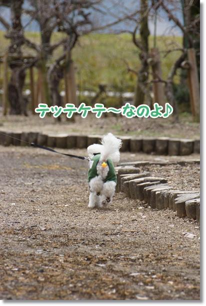 ご機嫌な散歩♪3