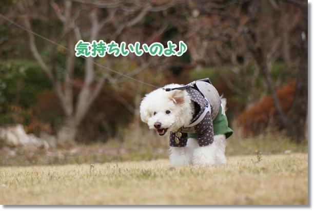 ご機嫌な散歩♪7