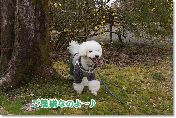 ご機嫌な散歩♪8