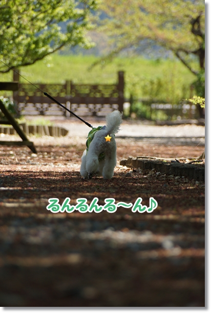 八重桜 満開♪4