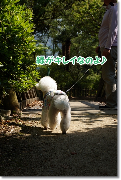 森 散歩4