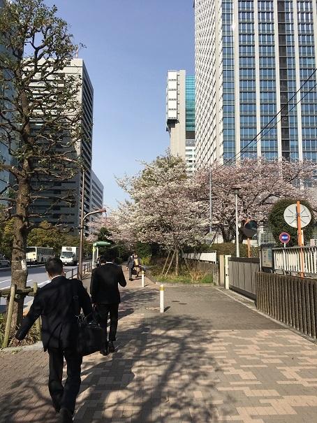桜_2017040701
