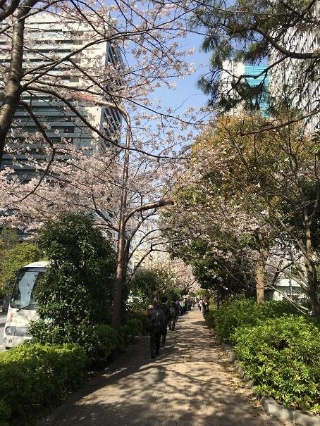 桜_2017040703