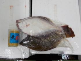 10鮮魚セット2017331