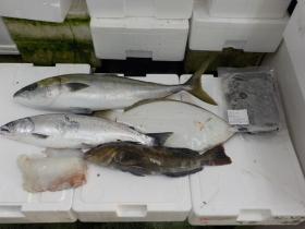 2鮮魚セット201741