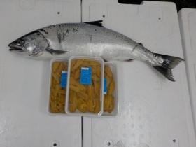 3鮮魚セット201746