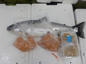 6鮮魚セット201748