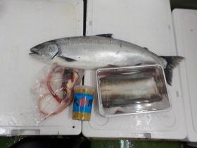 14鮮魚セット2017413