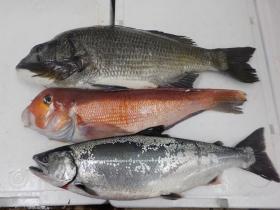 15鮮魚セット2017413