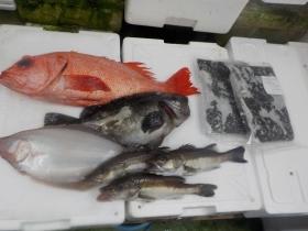 1鮮魚セット2017420