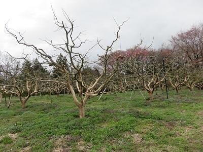 IMG_6435 ぶどう畑