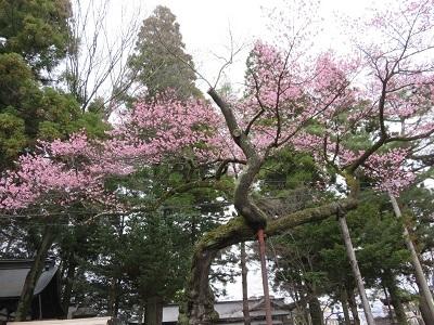 IMG_6643 愛宕稲荷神社