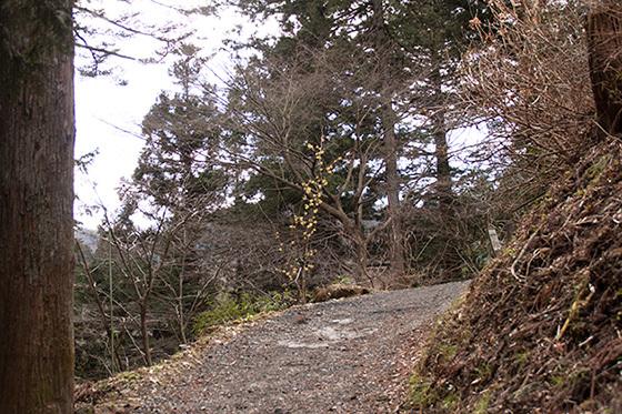日の出山への道IMG_3195