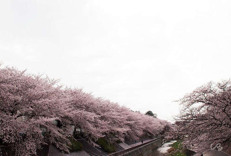 川IMG_5762