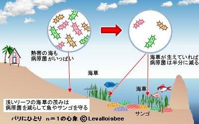 リーフの海草が海を守る