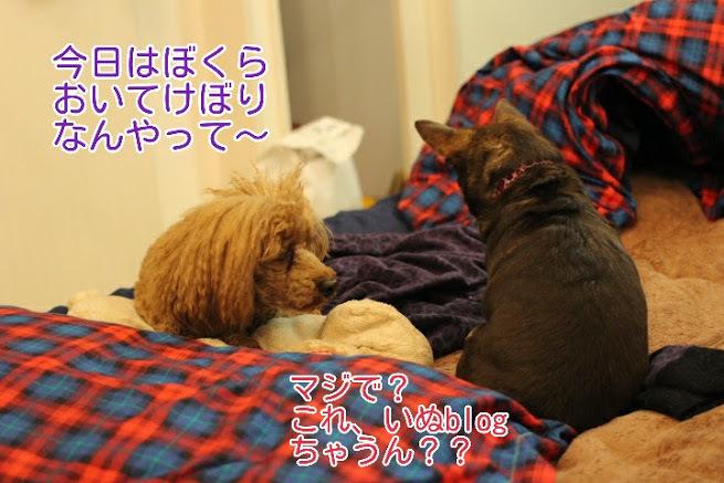 17-04-08-04-31-51-733_deco.jpg