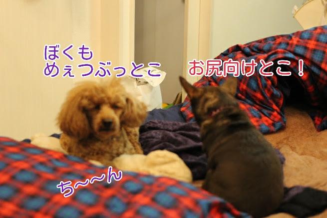 17-04-08-04-36-25-804_deco.jpg