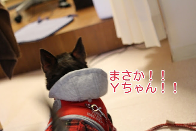 17-04-09-05-30-48-280_deco.jpg