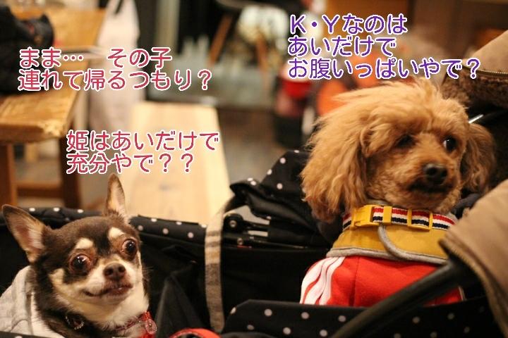 17-04-11-03-30-25-019_deco.jpg