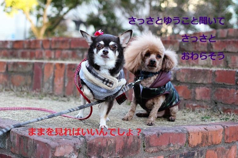IMG_0225-302.jpg