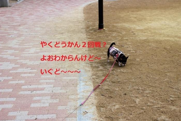 IMG_0423.jpg