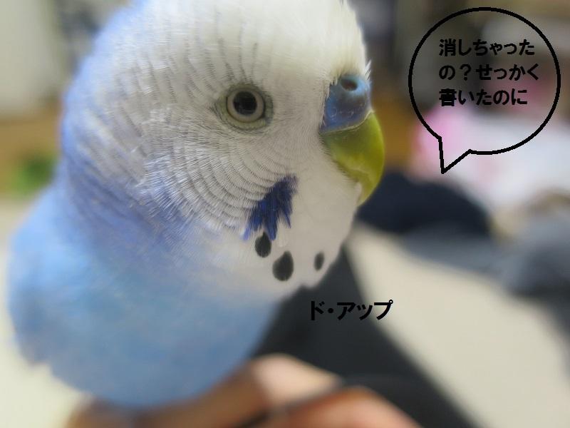 20170416091938c16.jpg
