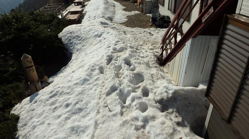 山小屋の庭には堆雪の山