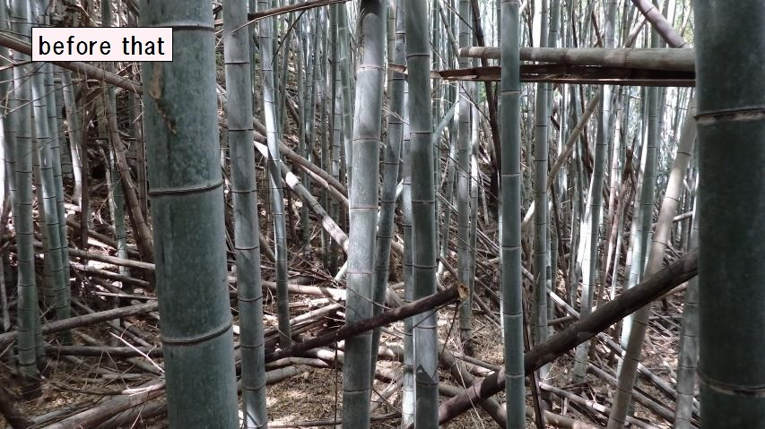 モウソウチクの密林