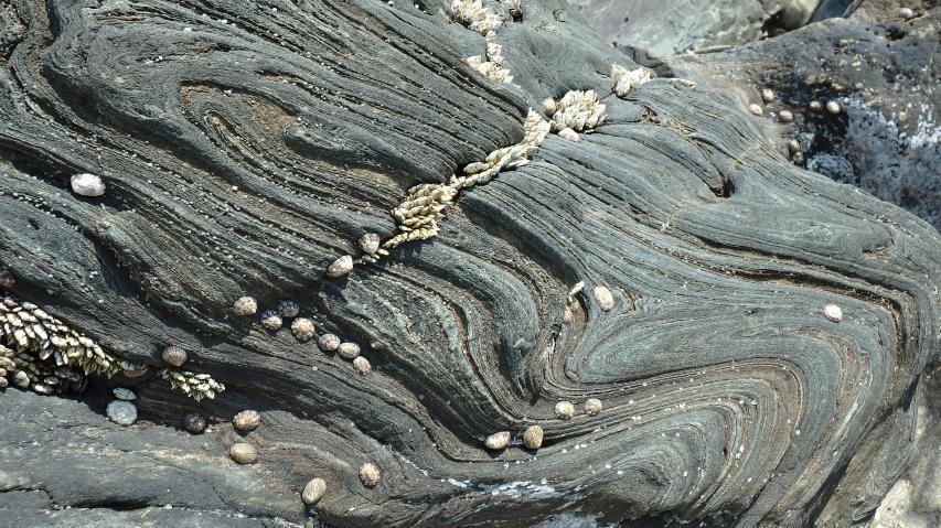日本地質百選、兵庫県天然記念物の鞘形褶曲