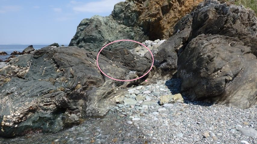 鞘形褶曲の見られる面が海側を向く