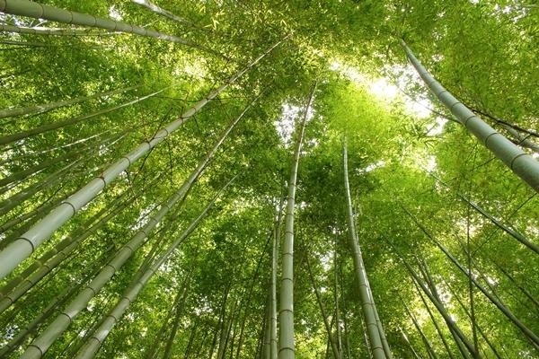 15, 2016-08-20 服部緑地 002 日本の竹 その2。 Japanese bamboo 600×400