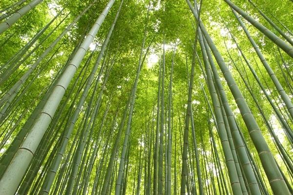 16, 2016-08-20 服部緑地 003 日本の竹 その3。 Japanese bamboo 600×400