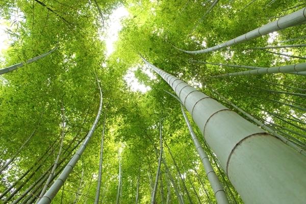 17, 2016-08-20 服部緑地 004 日本の竹 その4。 Japanese bamboo 600×400