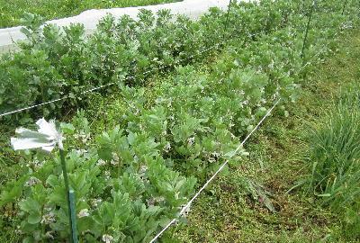 草刈り (1)