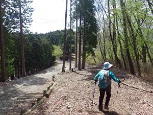 林道と併走